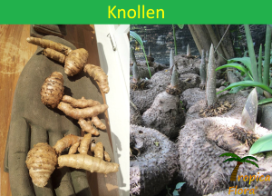 001 Knollen