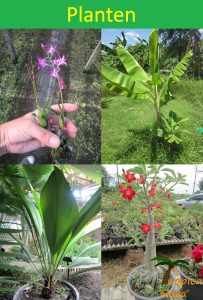 002 Planten